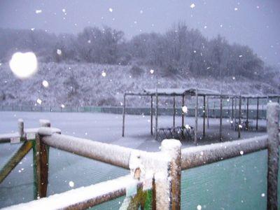 雪のドッグラン