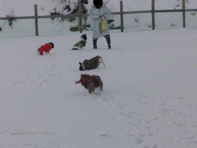 小型犬エリア♪