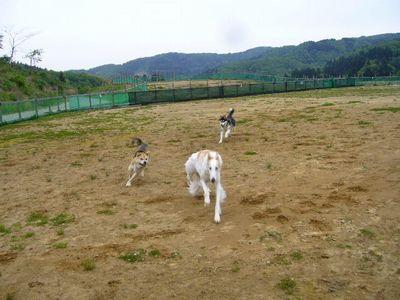 中・大型犬エリア