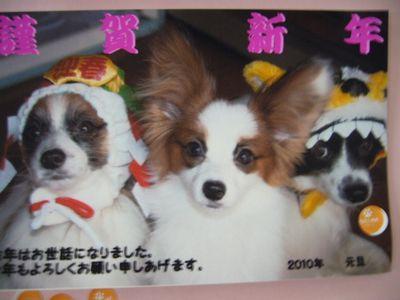レオ&翼&姫
