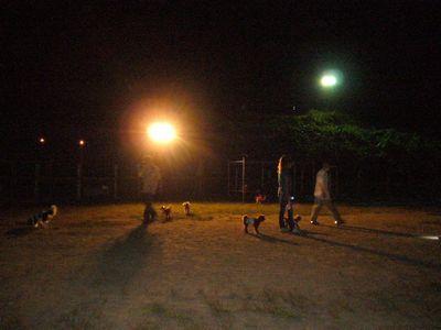 9/3welinadogpark