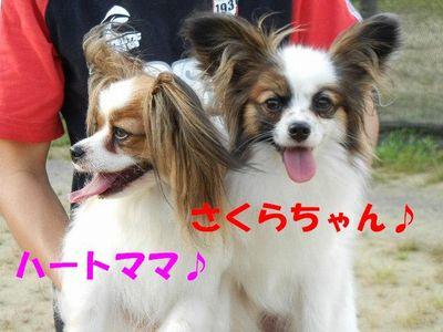 ハートちゃん&さくらちゃん