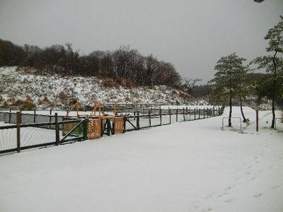12/10welinadogpark