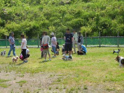 5/27welinadogpark