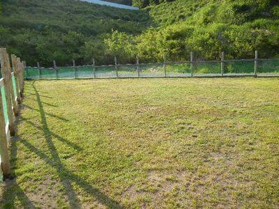 6/1welinadogpark