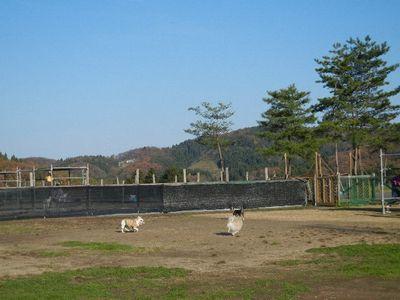 11/19welinadogpark