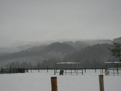 12/22welinadogpark