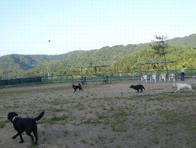 5/31welinadogpark