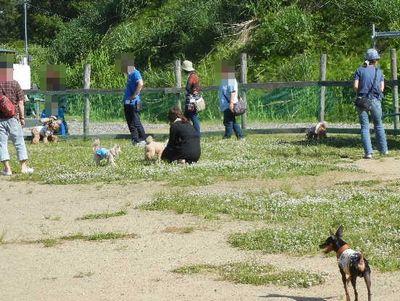 6/2welinadogpark