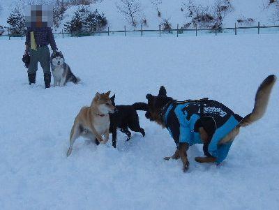 welina-dogpark.JPG