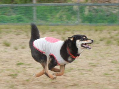 .welina-dogpark