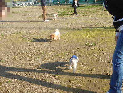 welina-dogpark