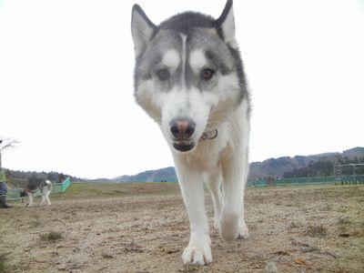 welina-dogpark.
