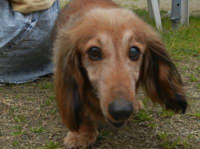 welina-dogparkG
